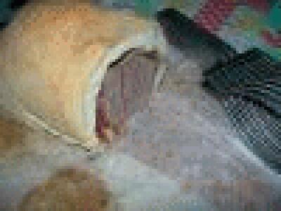 Arrosto nel pane