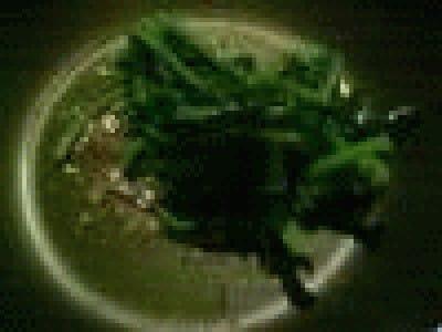Broccoletti al tegamino