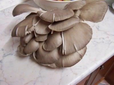 Risotto funghi, mele e noci
