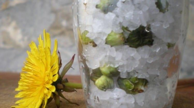 Boccioli di tarassaco sotto sale