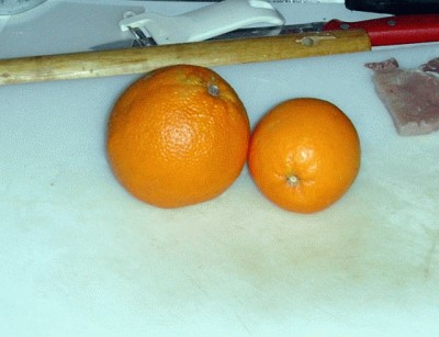 Millefoglie di maiale e arancia